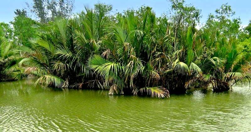 Sundarban-Golpata