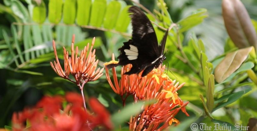 butterfly-park-chittagong-2