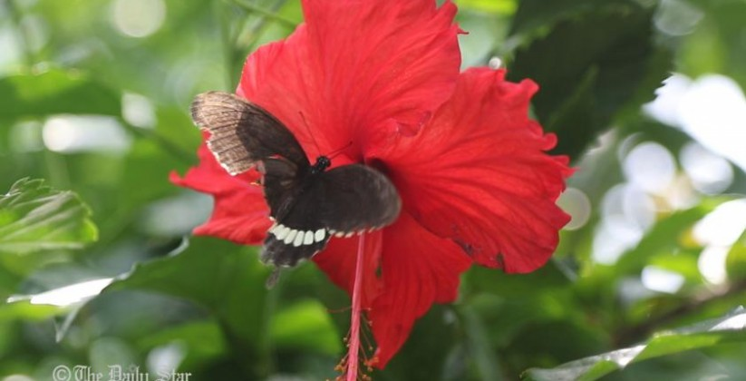 butterfly-park-chittagong